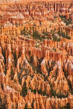 Usa, Utah, Bryce Canyon, Landscape with Cliff by Daniel Grill