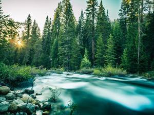 Last Light In Sequoia National Park by Daniel Kuras