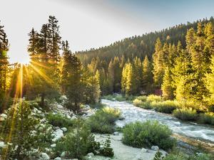 Shining Light In Sequoia National Park by Daniel Kuras