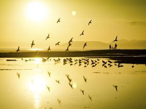 The Birds Standout Amongst the Glow of the Golden Hour on the California Coast by Daniel Kuras