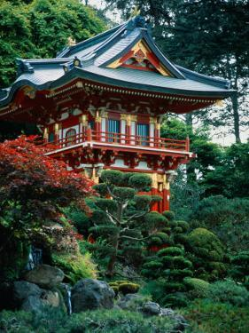 Japanese Tea Garden, San Francisco, CA by Daniel McGarrah