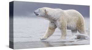 Arctic Icon by Daniel Smith
