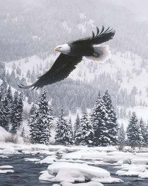 Free Flight (detail) by Daniel Smith