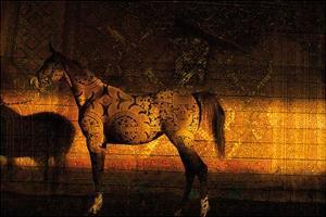 Golden Thai Arabian by Daniel Stanford