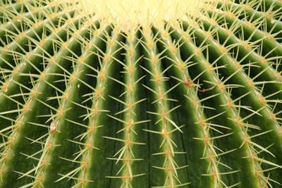 Cactus by Daniela Duncan