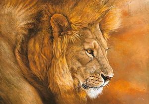 Lion du Serengeti by Danielle Beck