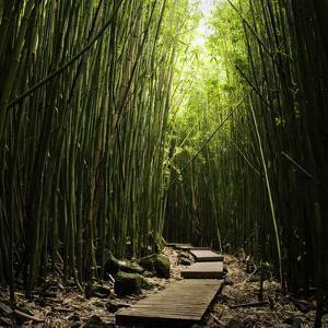 Boardwalk in Bamboo Forest by Danielle D. Hughson