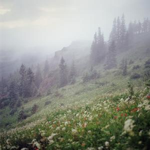 Foggy Forest and Hillside of Wildflowers by Danielle D. Hughson