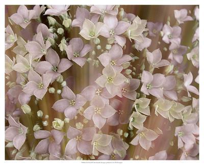 Soft Floral II