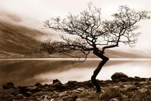 Loch Etive by Danita Delimont