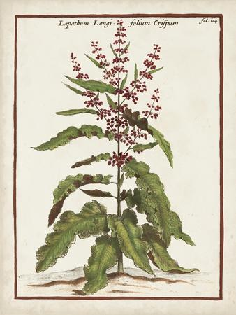 Munting Botanicals II
