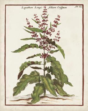 Munting Botanicals II by Danita Delimont