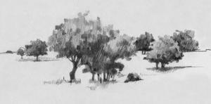 Treeline Sketch II by Danita Delimont