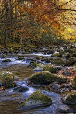 Autumn on Little River by Danny Head