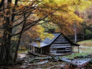 Damp Autumn Day by Danny Head