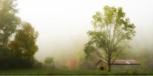 Fog at the Farm by Danny Head