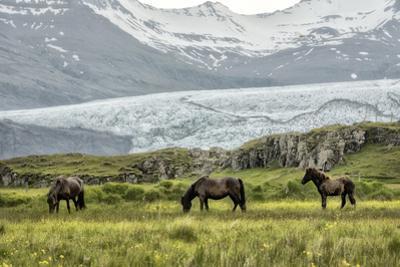 Grazing at the Glacier by Danny Head