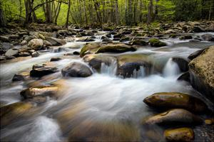 Spring on Porters Creek by Danny Head