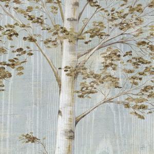 Birch Study II by Daphné B
