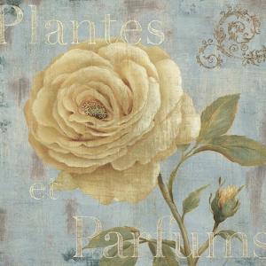 Vintage Fragrance III by Daphné B.