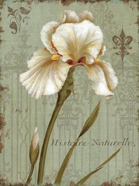 Histoire Naturelle I by Daphne Brissonnet