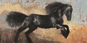 Black Stallion by Dario Moschetta