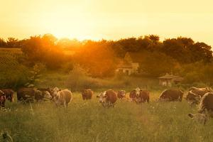 Farmland Summer Scene in Sunset by Dark Moon Pictures