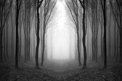 https://imgc.allpostersimages.com/img/posters/dark-woods_u-L-Q10WASR0.jpg?p=0