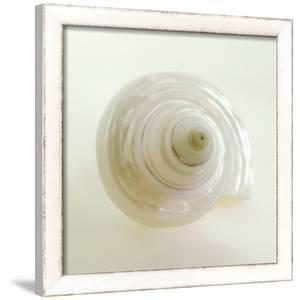 Shell IV by Darlene Shiels