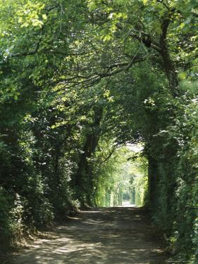 A Tree-Lined Country Road by Darlyne A. Murawski