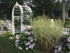 Arbored Entryway with Ornamental Grasses and Blooming Hydrangeas by Darlyne A. Murawski
