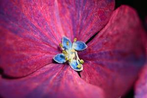 Close up of a hydrangea flower. by Darlyne A. Murawski