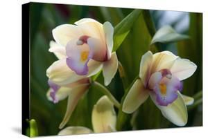 Close Up of Two Orchid Flowers by Darlyne A. Murawski