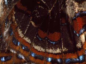 Close View of the Wing of a Butterfly by Darlyne A. Murawski