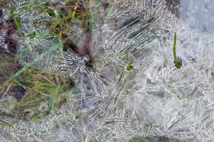 Crystalline Ice Patterns on the Ground Resulting from Refreezing by Darlyne A. Murawski