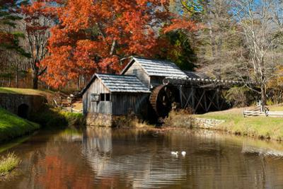 Ducks Swimming in a Pond at an Old Grist Mill in an Autumn Landscape