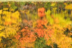 Fall Foliage Reflected on the Rippling Surface of a Pond by Darlyne A. Murawski