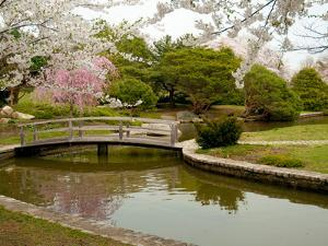 Japanese Garden with Cherry Trees, Pond and Footbridge in Springtime by Darlyne A. Murawski