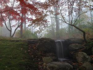 Japanese Maple Garden and Waterfall in Morning Fog by Darlyne A. Murawski