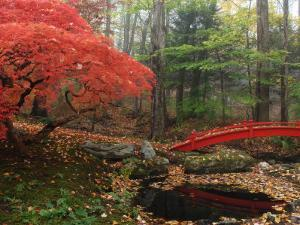 Japanese Maple Garden with Red Bridge by Darlyne A. Murawski