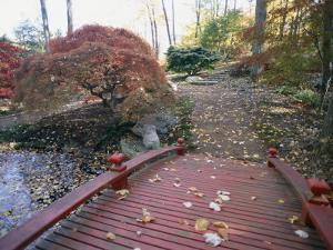 Japanese Maple Trees Exhibit Fall Color Changes in a Japanese Garden by Darlyne A. Murawski