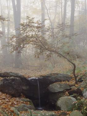 Japanese Maple Trees in the Fog in a Japanese Garden by Darlyne A. Murawski