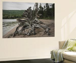 Large Driftwood Tree on the Warren Lake Beach, in Cape Breton Highlands National Park by Darlyne A. Murawski