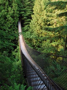 Lynn Canyon Suspension Bridge in Vancouver Bc, Vancouver, British Columbia, Canada by Darlyne A. Murawski