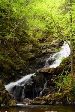Macintosh Brook Waterfalls in Cape Breton Highlands National Park by Darlyne A. Murawski