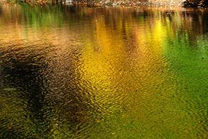 Reflections in a Pond of Colorful Fall Foliage by Darlyne A. Murawski