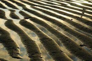 Sand and Water Patterns in an Intertidal Zone at Low Tide by Darlyne A. Murawski