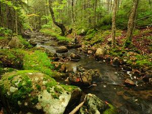 Scenic View of a Rocky Stream and Forest by Darlyne A. Murawski