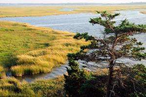 Scenic View of a Salt Marsh in the Cape Cod National Seashore by Darlyne A. Murawski