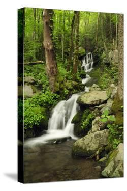 Scenic View of a Smoky Mountains Waterfall and Forest by Darlyne A. Murawski